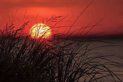 Sunset Through The Reeds Lavallette Nj Poster by Terry DeLuco