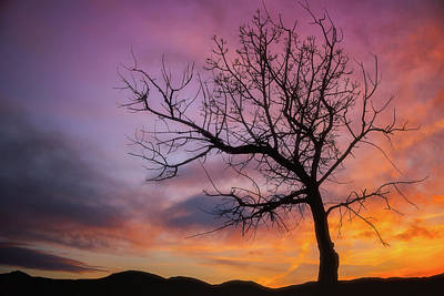 Poster featuring the photograph Sunset Tree by Darren White