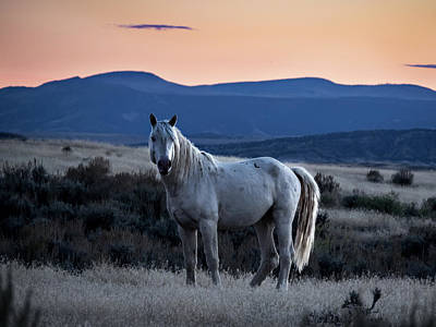 Sunset With Wild Stallion Tripod In Sand Wash Basin Poster
