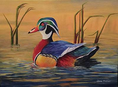 Sunset Wood Duck Poster