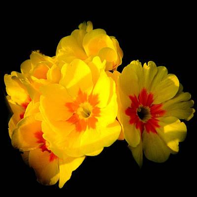 Sunshine English Garden Yellow Marigold Flowers In Bloom Poster