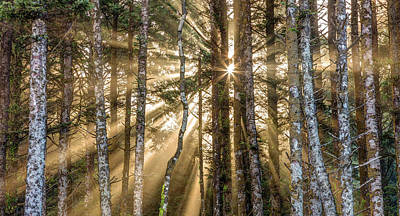 Poster featuring the photograph Sunshine Forest by Pierre Leclerc Photography