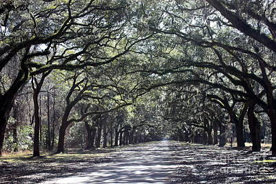 Sunshine On Live Oaks Poster by Carol Groenen
