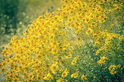 Superbloom Golden Yellow Poster
