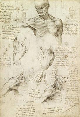 Superficial Anatomy Of The Shoulder And Neck, Recto Poster by Leonardo da Vinci