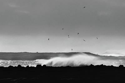Surf Birds Poster