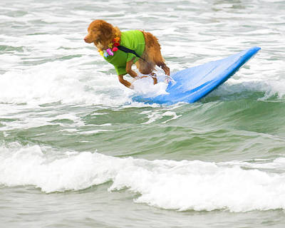 Surf Dog - Outta Here Poster by Waterdancer