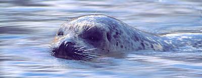 Surfacing Seal Poster