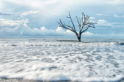 Surfside Tree Poster