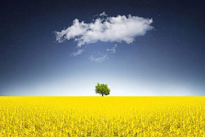 Surreal Canola Field Poster by Bess Hamiti