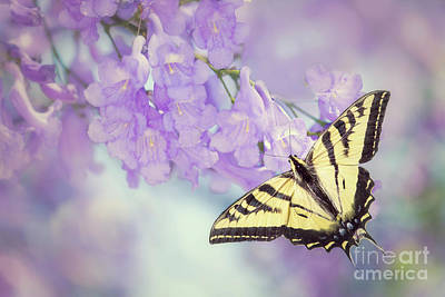 Swallowtail On Purple Flowers Poster