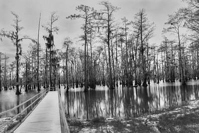 Swamp Dock Black And White Poster