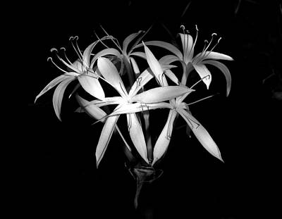 Poster featuring the photograph Swamp Lilies by Peg Urban