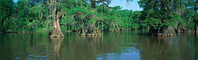 Swamp, Louisiana Poster
