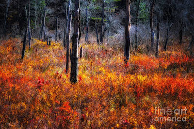 Swamp Music - A Late Autumn Impressionist Scenic Poster by Thomas Schoeller