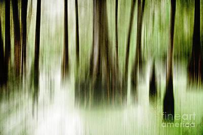 Swamp Poster by Scott Pellegrin