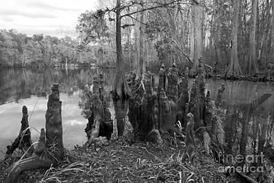 Swamp Stump Poster