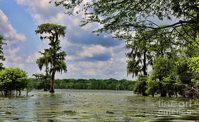 Swamps Bayou Country Lake Martin  Poster