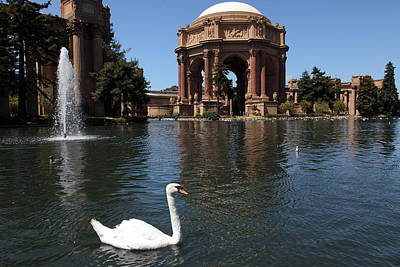Swan At The San Francisco Palace Of Fine Arts - 5d18069 Poster by Wingsdomain Art and Photography