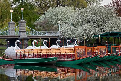 Swan Boat Spring Poster