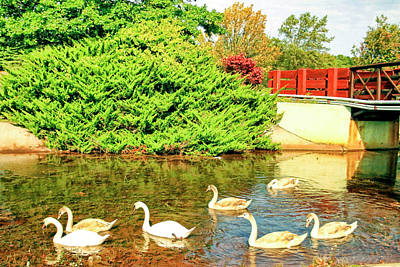 Family Of Swans At Kennedy Park, Sayreville, New Jersey Poster