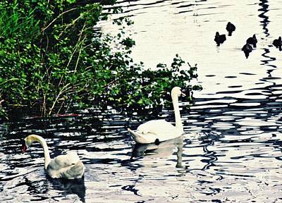 Poster featuring the photograph Swan Family On The Rhine 2 by Sarah Loft