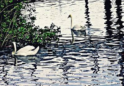 Poster featuring the photograph Swan Family On The Rhine 3 by Sarah Loft