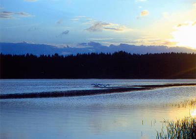 Swan Lake Poster by Merja Waters