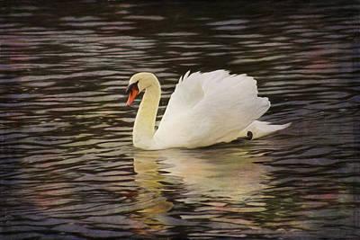 Graceful Swan Poster by Marilyn Wilson