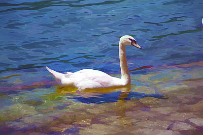 Swan On A Swiss Lake Poster by Antique Images