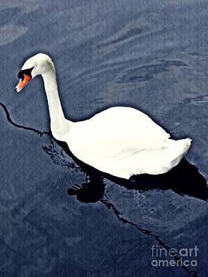 Poster featuring the photograph Swan On The Rhine by Sarah Loft