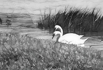 Swan Pair Bw Abstract Poster