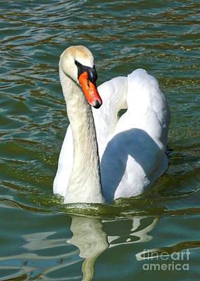 Swan Swirls Poster