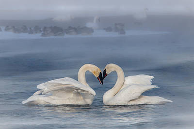Swan Valentine - Blue Poster by Patti Deters