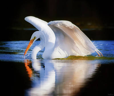 Swanlike Poster