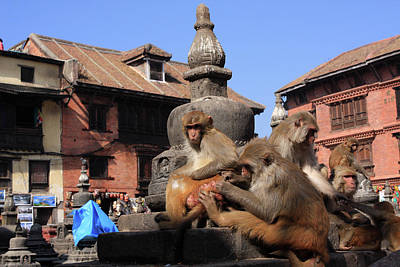 Swayambhunath Temple Monkeys Poster
