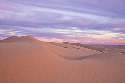 Poster featuring the photograph Sweeping Dunes At Sunset by Patricia Davidson