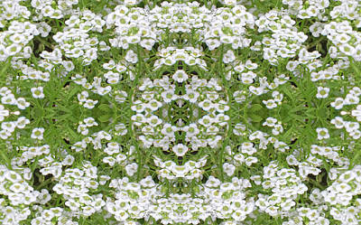Poster featuring the digital art Sweet Alyssum Abstract by Linda Phelps