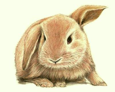 Sweet Bunny Poster