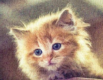 Sweet Ginger Fuzz Poster