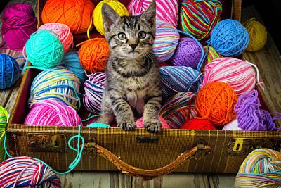 Sweet Kitten In Suitcase Poster