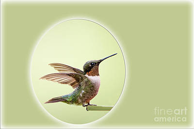 Sweet Little Hummingbird Poster by Bonnie Barry