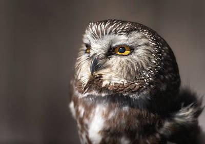 Sweet Little Owl Poster