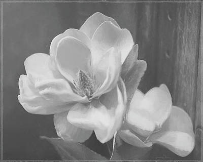 Sweet Magnolia Blossom Bw Poster