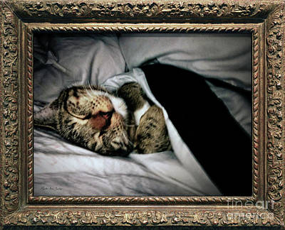 Poster featuring the photograph Sweet Simba Photo A8117 by Mas Art Studio