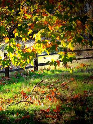 Sycamore Grove Fence 2 Poster by Carol Groenen