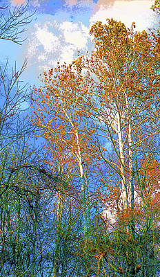 Sycamore Tree Image Poster by Paul Price