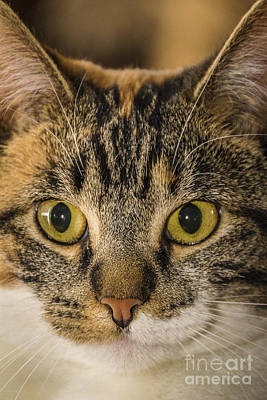 Symmetrical Cat Poster