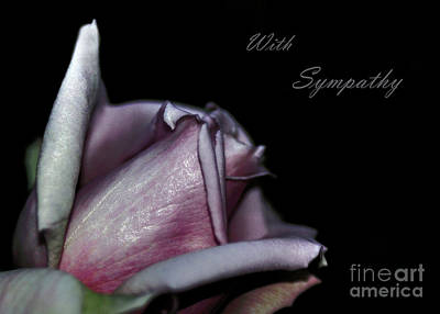 Sympathy Card With A Rose Poster by Kaye Menner