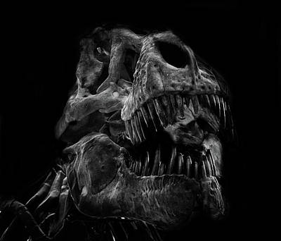 T Rex Skull Poster by Martin Newman